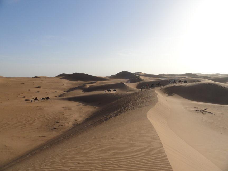 Marruecos dromedarios Méharée