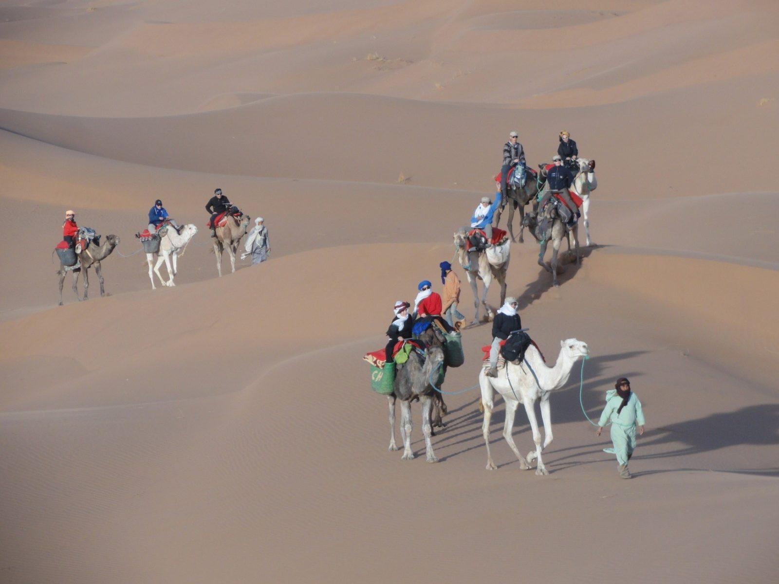 Marruecos dromedarios